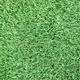 Seamless Green Grass Background - PhotoDune Item for Sale