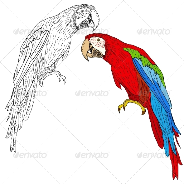 GraphicRiver Macaws 6583005