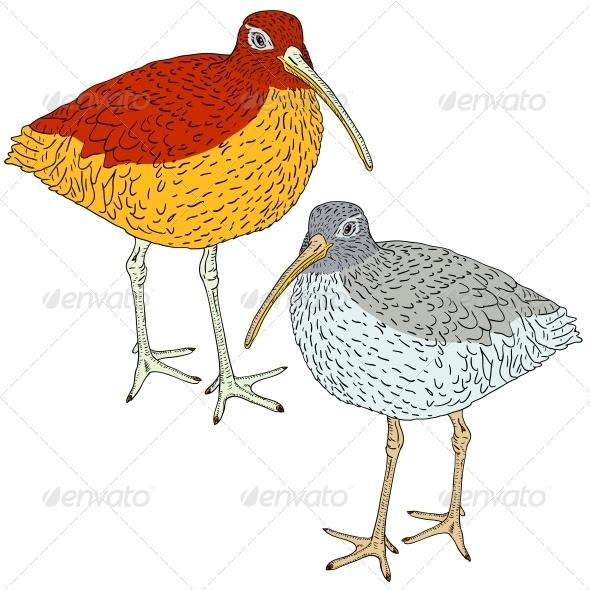 GraphicRiver Eurasian Curlew Bird Vector Illustration 6583020