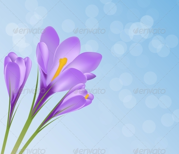 Vector Illustration Crocus Flower Background