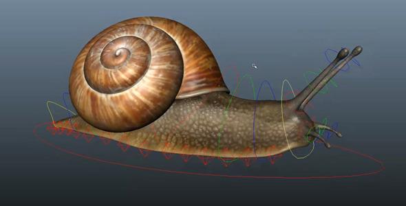 3DOcean Snail 6599115