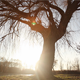 Willow In The Sunset - VideoHive Item for Sale