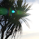 Palm Tree 3 - VideoHive Item for Sale