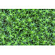 Forest moss texture - GraphicRiver Item for Sale