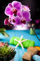 Orchids,organic products, Spa  - PhotoDune Item for Sale