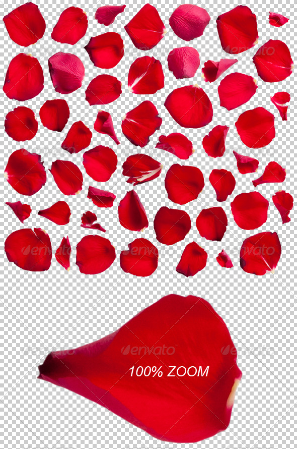 50 Red Rose Petals Photo-realistic