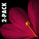 Rain of Flowers - Red Crocus - Pack of 2 - VideoHive Item for Sale