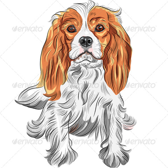 GraphicRiver Cavalier King Charles Spaniel Breed 6641246