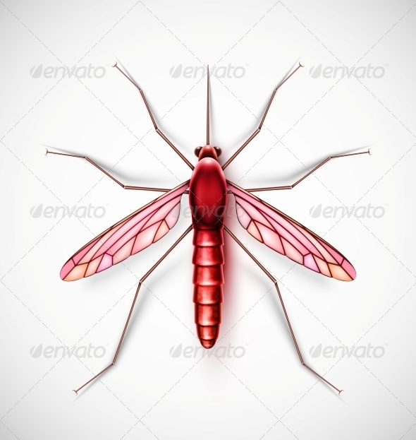 GraphicRiver Isolated Mosquito 6643703