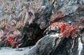 Dark Scary Cave - PhotoDune Item for Sale