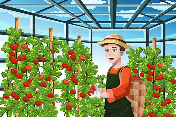 GraphicRiver Farmer Harvesting Tomatoes 6657982