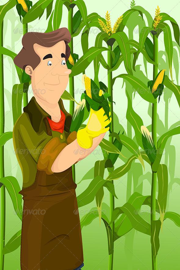 GraphicRiver Farmer Harvesting Corns 6665914