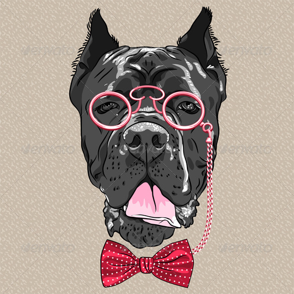 Cane Corso - Animals Characters