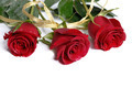 Three red roses isolated - PhotoDune Item for Sale