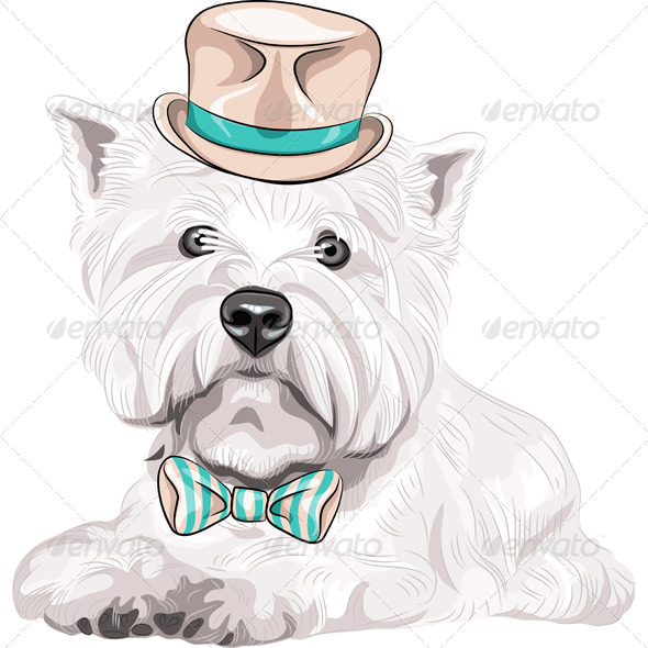 Dog West Highland White Terrier  - Animals Characters
