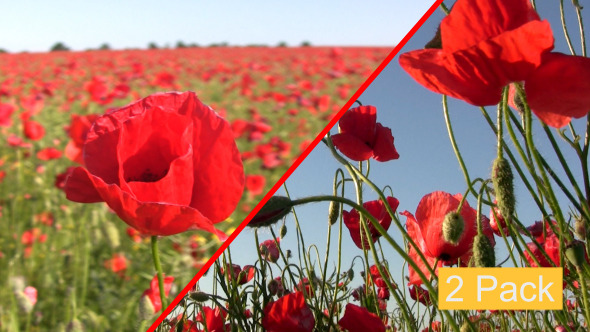 Poppy Field 2-Pack