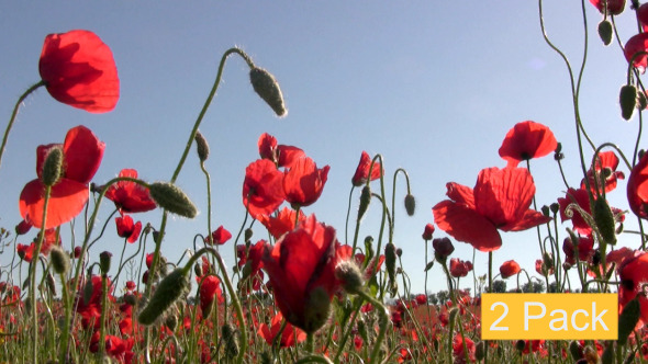 Red Poppies And Sun 2-Pack