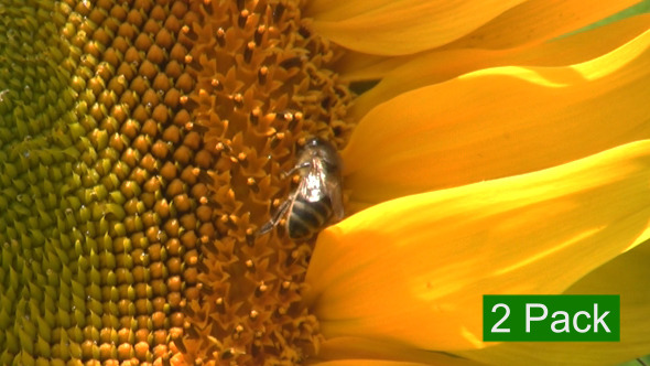 Sunflower And Bees 2-Pack