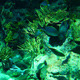 Underwater World - VideoHive Item for Sale