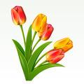 Bouquet - PhotoDune Item for Sale