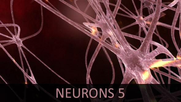Neurons 5