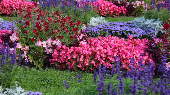 Flowerbed With Different Flowers