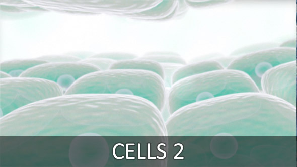 Cells 2 2-Pack