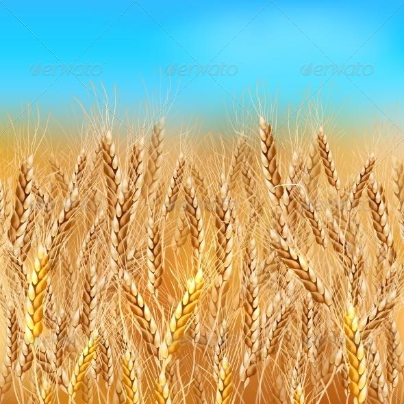 GraphicRiver Realistic Wheat Field 6715352