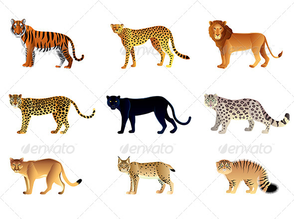 GraphicRiver Big Cats Set 6724866