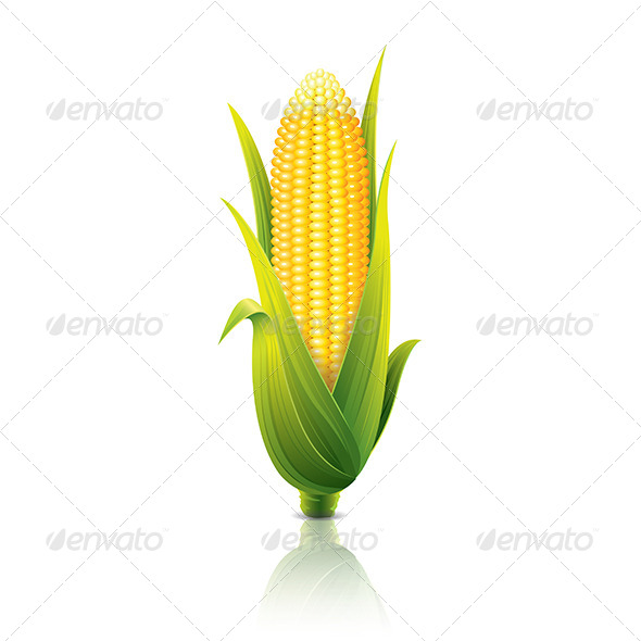GraphicRiver Corncob 6725009