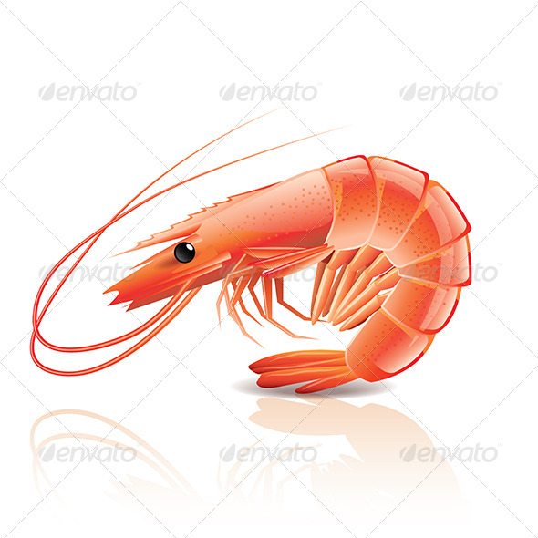 GraphicRiver Cooked Shrimp 6725297