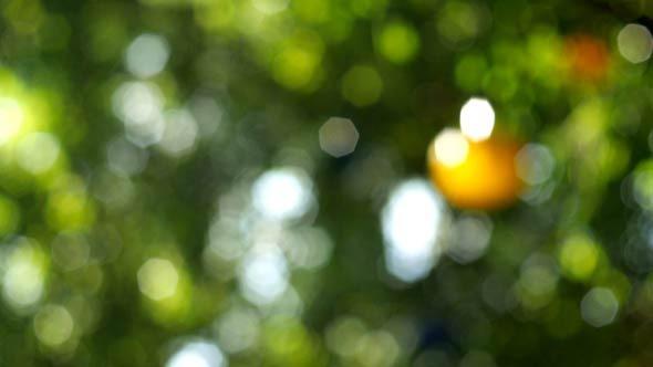 Bokeh Tree Garden