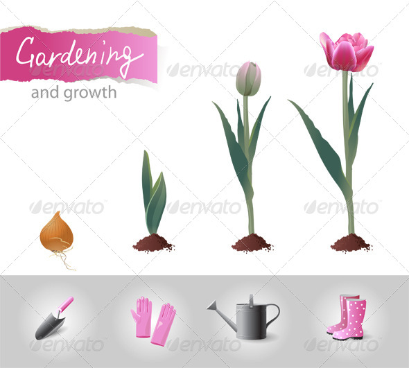 GraphicRiver Growing Tulip 6618150