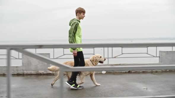 Download Owner Walking Labrador Dog in Wet Weather nulled download