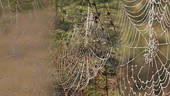 Silver Spiderweb