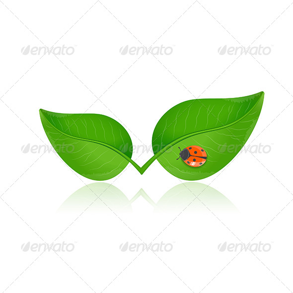 GraphicRiver Green Leaf with Ladybird 6763803