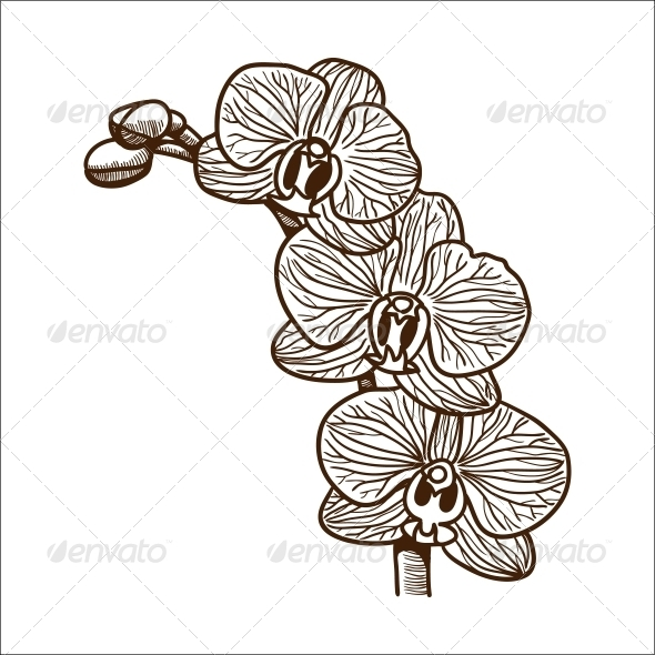 GraphicRiver Orchid Flower 6767303