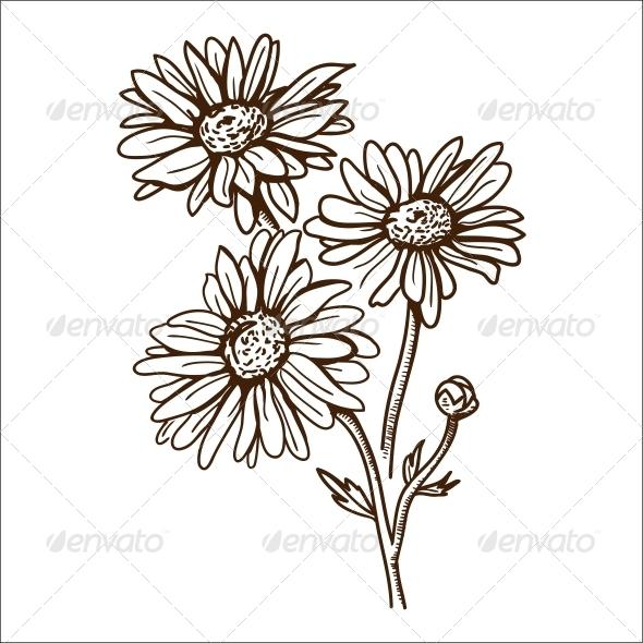 GraphicRiver Camomile Flower 6767833