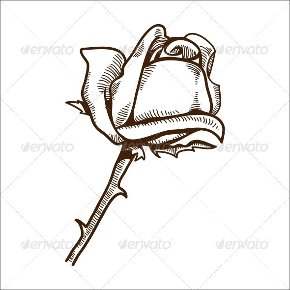 GraphicRiver Rose Flower 6768049