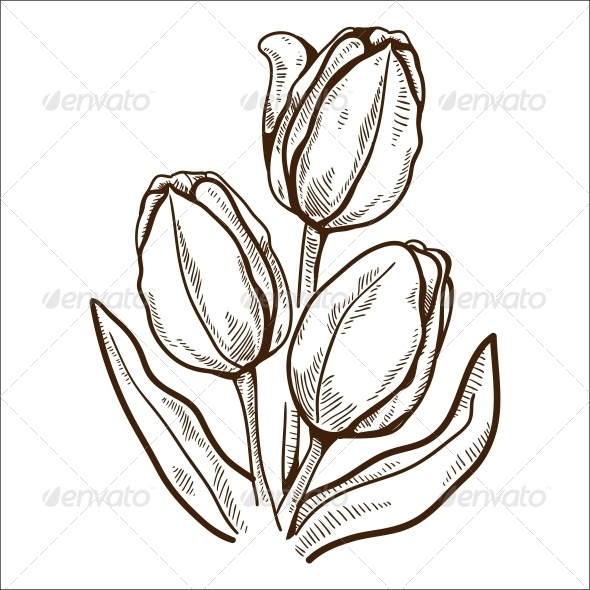 GraphicRiver Tulip Flower 6768054