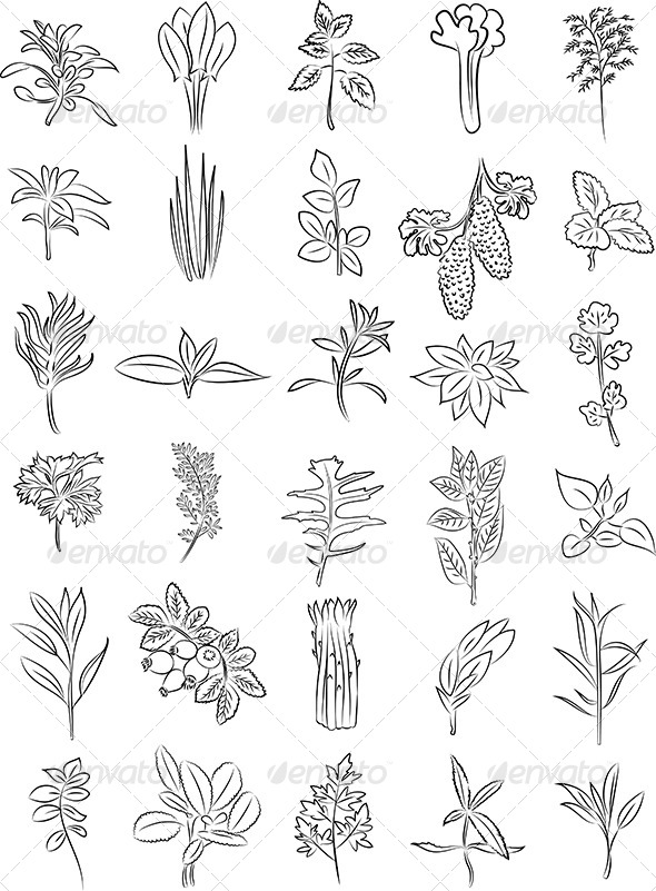 GraphicRiver Herbs Vector 6770122