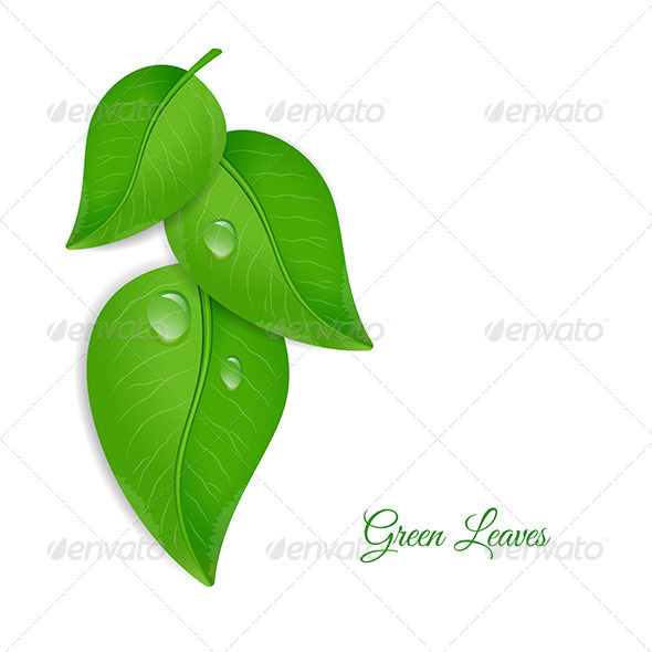 GraphicRiver Green Leaves with Water Drops 6774476