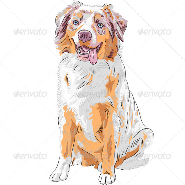 Red Australian Shepherd Dog - Animals Characters