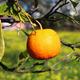 Orange - PhotoDune Item for Sale