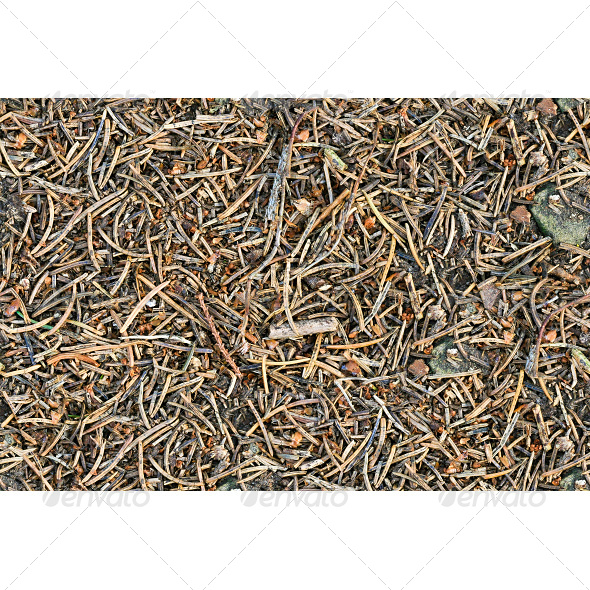 GraphicRiver Tileable Forest Ground Pine Needles Texture 6796580