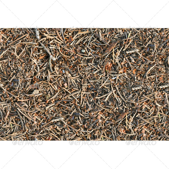 GraphicRiver Tileable Forest Ground Pine Needles Texture 6807328