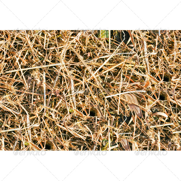 GraphicRiver Tileable Forest Ground Grass Texture 6807482