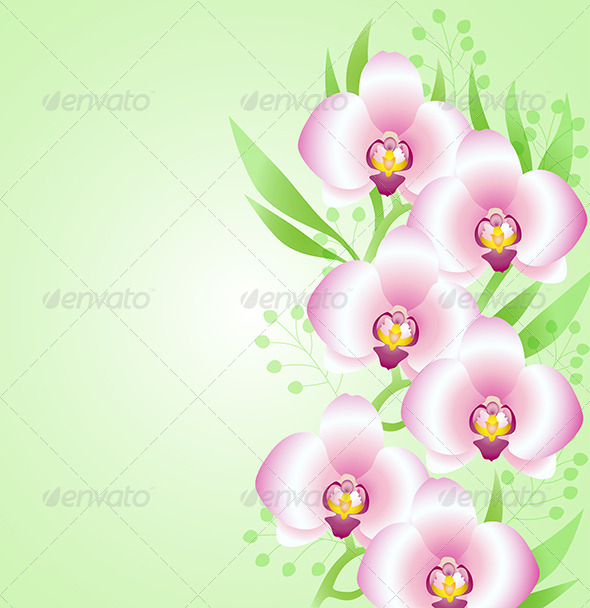 GraphicRiver Green Background with Orchids 6812553