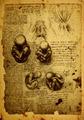 Anatomy - PhotoDune Item for Sale