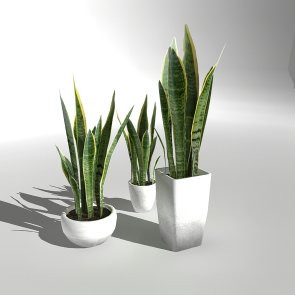 "Low-poly Plant ""Snake Plant"" - 3DOcean Item for Sale"